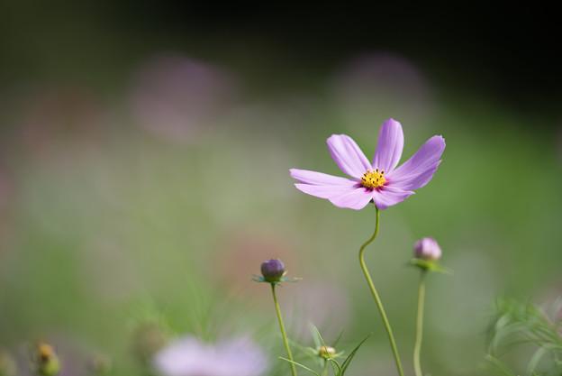 【昭和記念公園(花の丘「緑の背景」】4