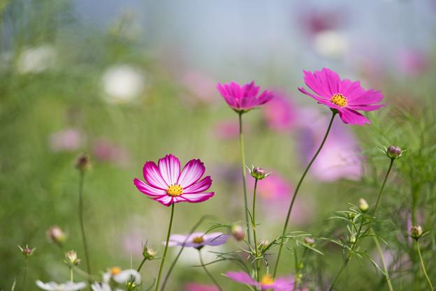 【昭和記念公園(花の丘「緑の背景」】5