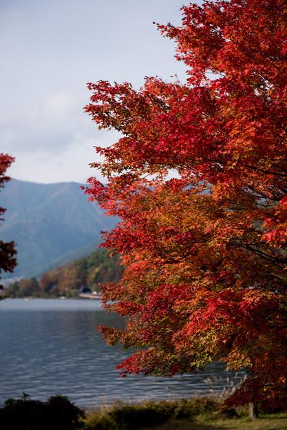 【紅葉(河口湖)】4