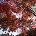 【薬師池公園(紅葉I)】1