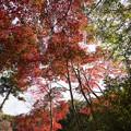 【薬師池公園(紅葉I)】2