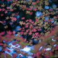 【薬師池公園(紅葉III)】1