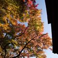 Photos: 【三渓園(聴秋閣近辺)】3