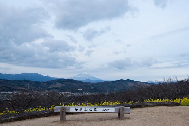 【吾妻山公園(富士山と菜の花)】1