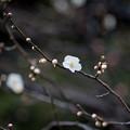 Photos: 【大船植物園(残雪)】1