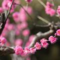 Photos: 【大船植物園(大盃)】2