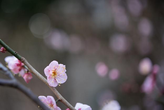 【大船植物園(道知辺)】3