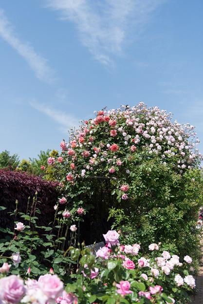 【花菜ガーデンの眺め】02