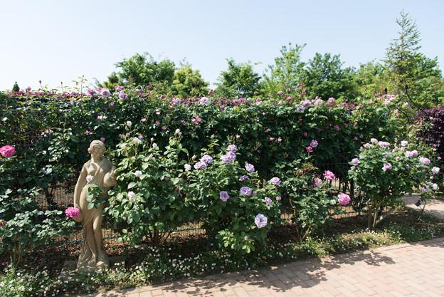 【花菜ガーデンの眺め】10