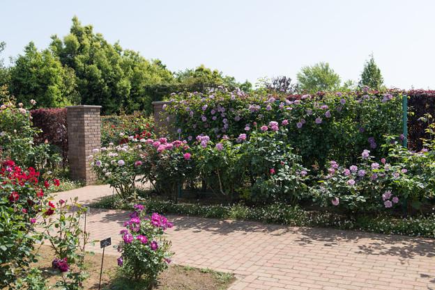 【花菜ガーデンの眺め】11