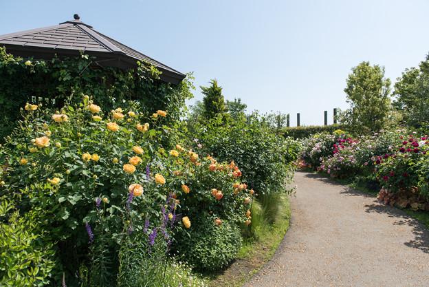 【花菜ガーデンの眺め】12