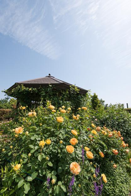 【花菜ガーデン(モリニュー)】1