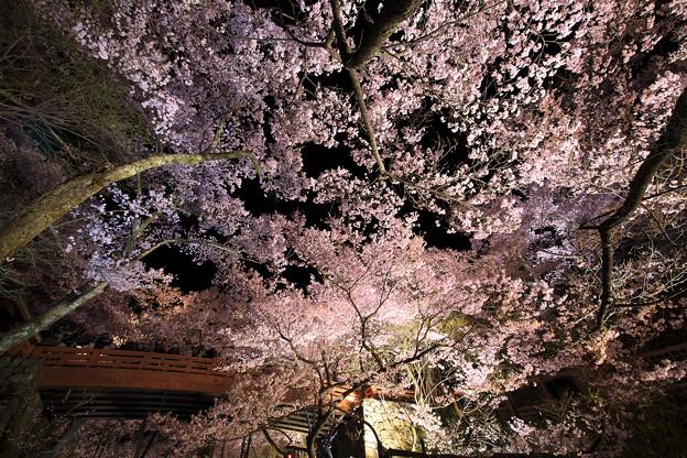10高遠の桜D5(16.4.8-9) 119