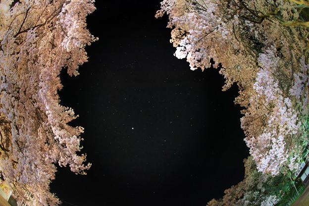 19高遠の桜D5(16.4.8-9) 265