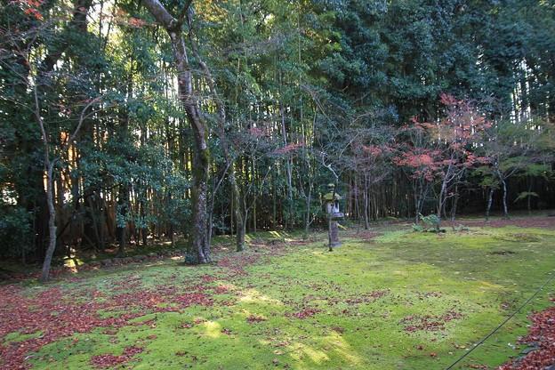 IMG_4656大徳寺・高桐院・庭園(楓の庭)