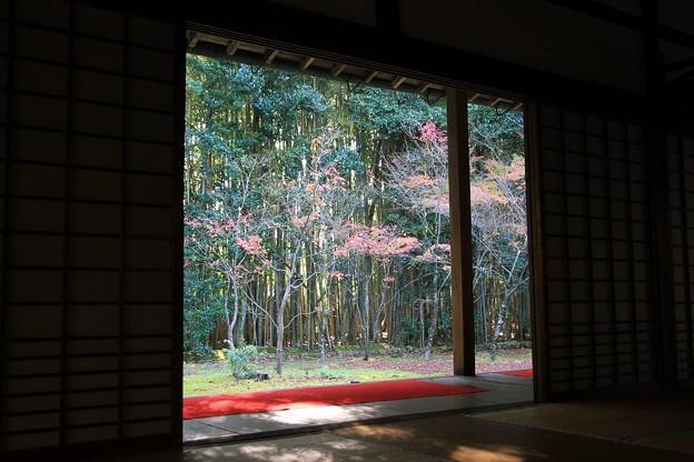IMG_4663大徳寺・高桐院・額縁風