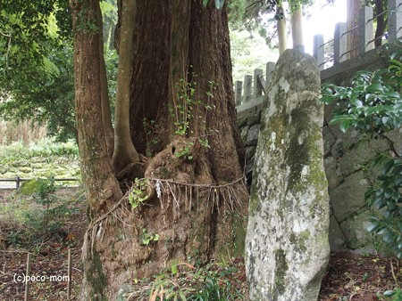 雷山雷神社 PA120375