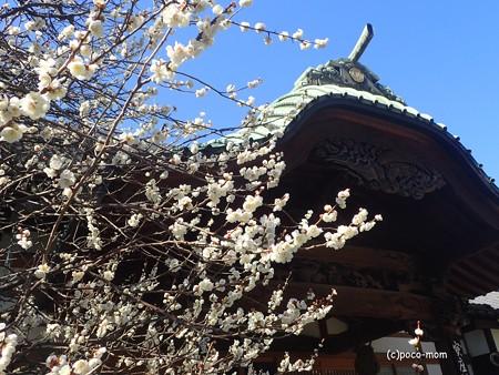 吉祥寺のお寺さん P2262399