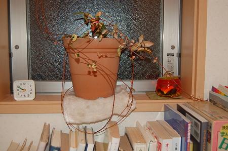 イカちゃんの鉢植え