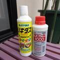 写真: 1yakuza28020601