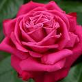 写真: santu27051901