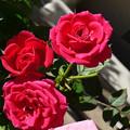 写真: joyha27112703