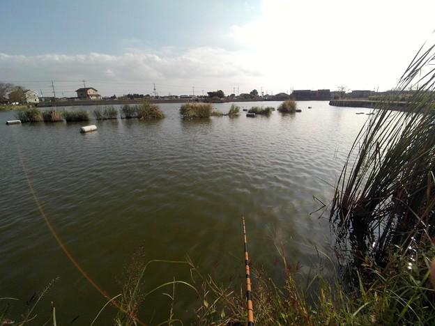 写真: 遠州池