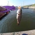 Photos: 鯉っ子