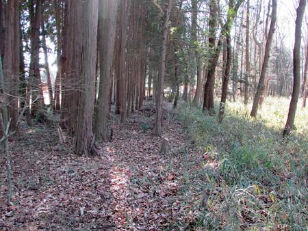 裏山下刈り、タラノキ の巻
