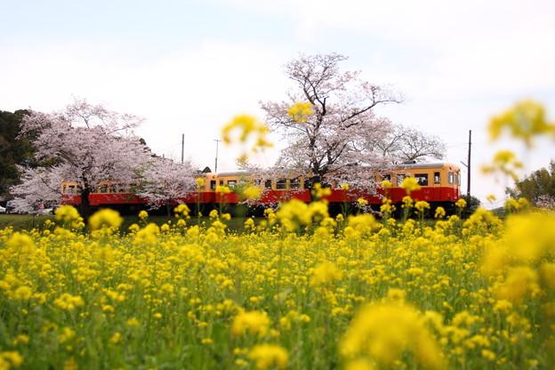 Photos: 飯給駅 春爛漫