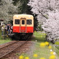 写真: 小湊鐵道 春爛漫