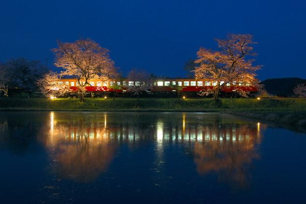 Photos: 飯給夜桜 宵 RAW現像