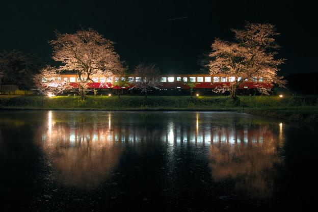 Photos: 飯給夜桜 夜 RAW現像