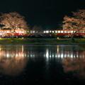 写真: 飯給夜桜 夜 RAW現像