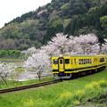 桜のトンネル列車