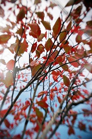 トイカメラde紅葉2009/11/12-11650002