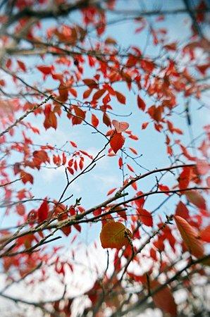 トイカメラde紅葉2009/11/12-11650001