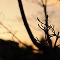 Photos: 20091206_160150