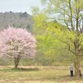 写真: 春を惜しむ人