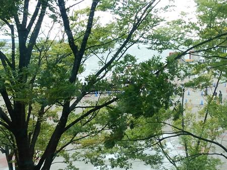 木の向こう側にイングラムが居るんですが…