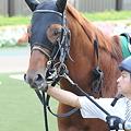 Photos: ダノンヨーヨー@富士S パドック