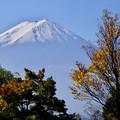 2015富士山麓の秋35「秋へのプロローグ」