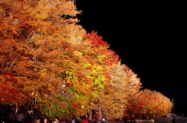2015富士山麓の秋154