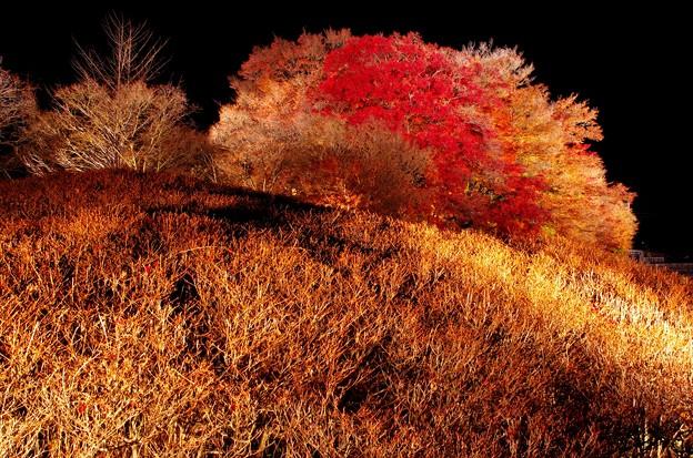 2015富士山麓の秋153