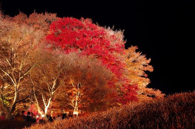 2015富士山麓の秋152