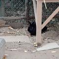 Photos: 埼玉県こども動物自然公園
