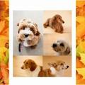 Photos: A4-autumn1-sample