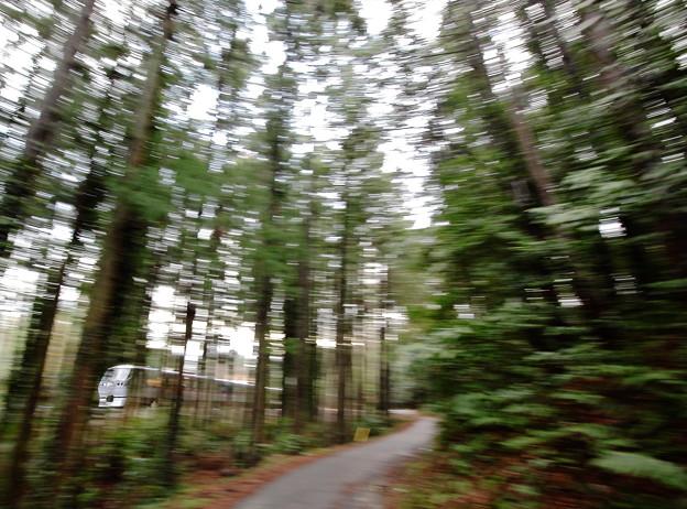 写真: 森の中を行く