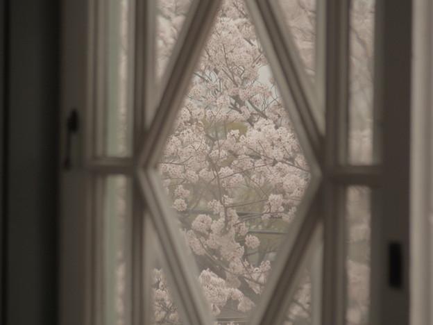 写真: 桜景色