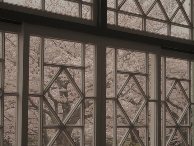 Photos: 邸宅の桜